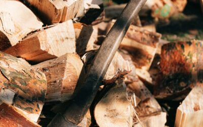 Everything you want to know about tree cutting